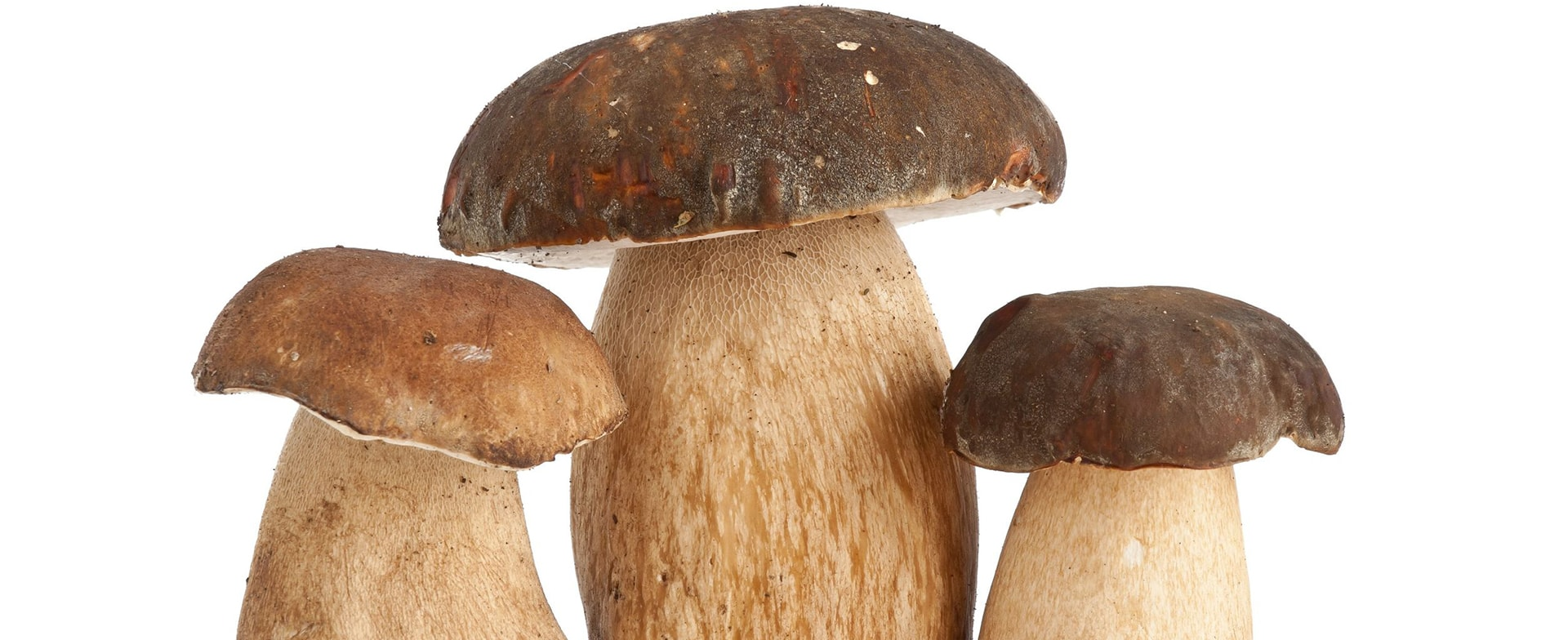 boletus bottom by goldistra