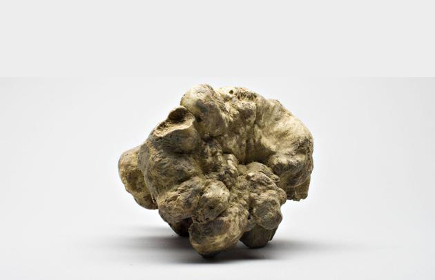 white truffle by gold istra tartufi